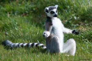 Йога и животные. Как они это делают.