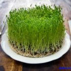 10 плюсов для здоровья или польза пророщенных семян