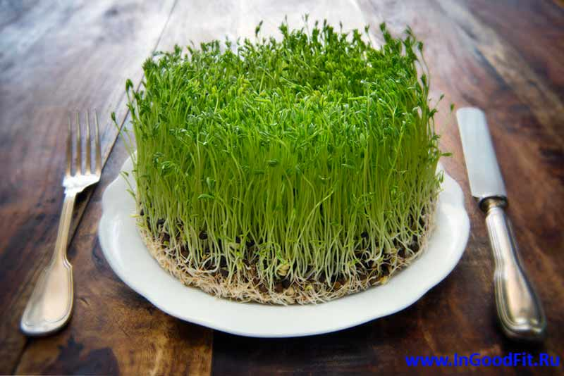 польза пророщенных семян