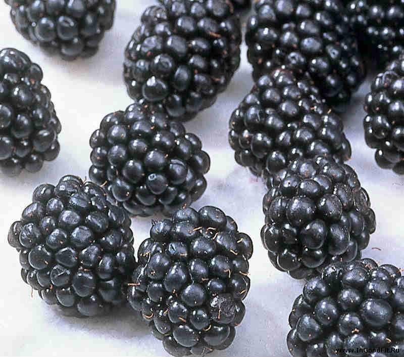 полезные ягоды ежевики