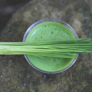 10 Преимуществ для здоровья от зеленых ростков пшеницы